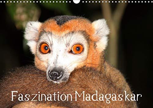Faszination Madagaskar (Wandkalender 2021 DIN A3 quer)