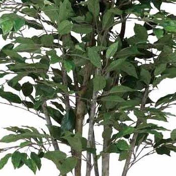 グリーンアート『tree-cベンジャミン・ツリー160㎝』