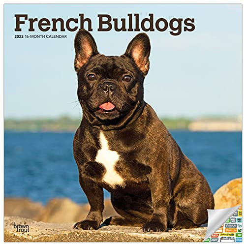 French Bulldogs Calendar 2022 -- Deluxe 2022 French Bulldog Wall Calendar Bundle with Over 100 Calendar Stickers (Dog Lovers Gifts, Office Supplies)