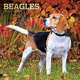 Beagles 2020 - 16-Monatskalender mit freier DogDays-App: Original BrownTrout-Kalender [Mehrsprachig] [Kalender] (Wall-Kalender)