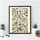 A&D Antike Botanische Drucke Vintage Pilz Poster