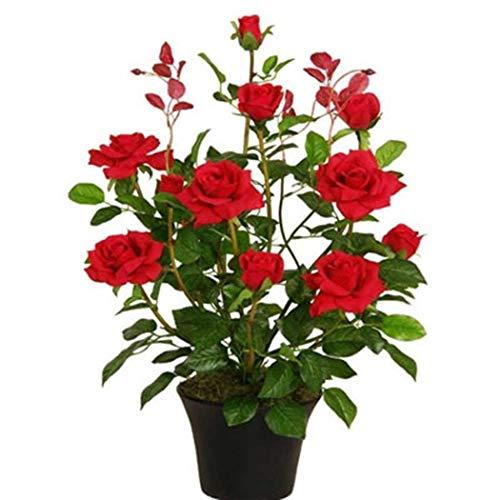 begorey Garten - Mini Rose Baum Samen 50 Stk. Mehrjährige Duftenden Samen Pflanzensamen Blumensamen Duftenden Rose Blüten Samen