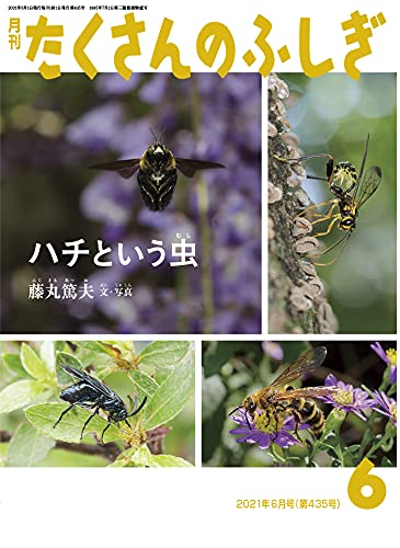 ハチという虫 (月刊たくさんのふしぎ2021年6月号)