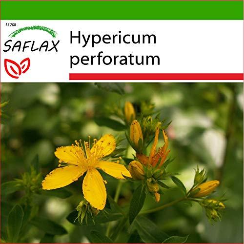 SAFLAX - Heilpflanzen - Johanniskraut - 300 Samen - Mit keimfreiem Anzuchtsubstrat - Hypericum perforatum