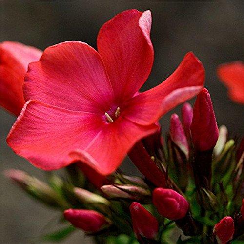 Graines de fleurs 15 pcs cycas graines graines en pot jardin Fournitures Bonsai