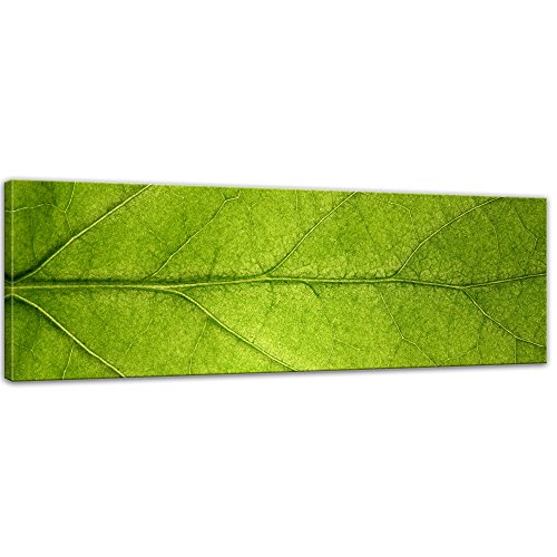 Keilrahmenbild - Blatt II - Bild auf Leinwand - 120x40 cm einteilig - Leinwandbilder - Pflanzen & Blumen - Nahaufnahme - Blattader - grün