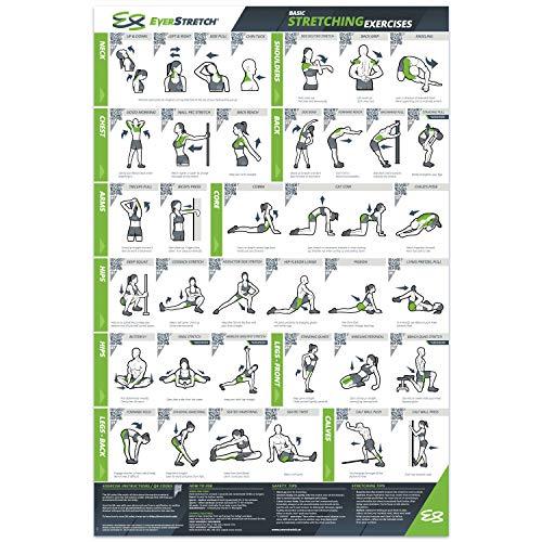 EverStretch Übungsposter für das Fitness-Studio zu Hause, laminiert, 61 x 91,4 cm, mit 37 Dehnübungen, jede Dehnung mit leicht verständlicher Videoanleitung (evtl. nicht in deutscher Sprache)