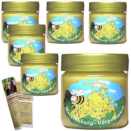 Robinienhonig 6 x 500g | Deutsche Herkunft - Mecklenburg | reiner Honig - direkt vom Imker keine Massenware mit Rezeptheft