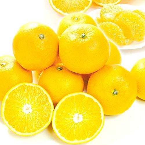 国華園 食品 和歌山産 ご家庭用 はっさく 5�s1箱 柑橘
