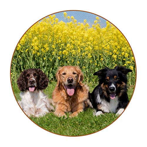 Coasters for Drinks Happy Dog Cute 6Pcs Funny Coasters, Housewarming Gifts New Home Hostess Gifts for Presents, Kitchen, Home Living Room Decor, Table Bar Decorations 4.3 in