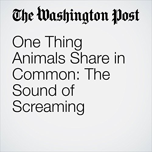 One Thing Animals Share in Common: The Sound of Screaming copertina