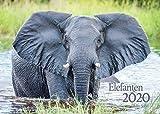 Edition Seidel Elefanten Premium Kalender 2020 DIN A3 Wandkalender Tiere Afrika