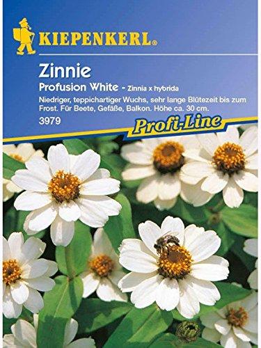 Zinnia elegans Zinnie Profusion White