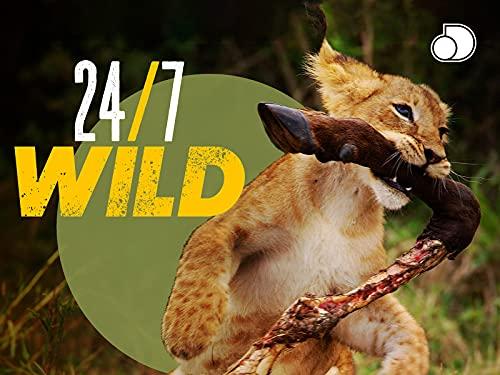 24/7 Wild - Season 1
