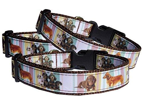 BGDesign Halsband Dackel Hundehalsband Langhaar und Kurzhaar Teckel Nylon ausgefallen braun verstellbar Halsung 30-40 cm x 2 cm breit