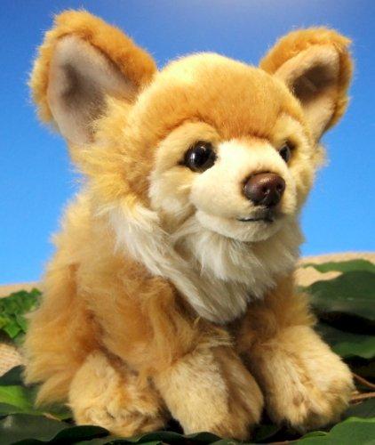 Chihuahua hellbraun bezaubernder kleiner Hund 6,5