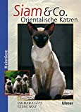 Siam & Co. Orientalische Katzen (Heimtiere)
