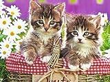 Plaid Paint by Numbers for Adults Decorazione Della parete di casa Set di dipinti acrilici Due simpatici gattini Paint by Numbers Regali 40X50Cm Senza Cornice