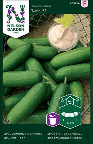 Nelson Garden 1933, Gurke, Topf-, Iznik F1, Samen (Einzelpackung)