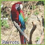 Parrots 2021: Calendar 2021 Wall Calendar Monthly Calendar 12 Month
