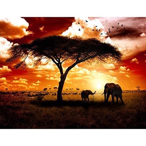 Fototapeten Afrika Elefanten 352 x 250 cm Vlies Wand Tapete Wohnzimmer Schlafzimmer Büro Flur Dekoration Wandbilder XXL Moderne Wanddeko - 100% MADE IN GERMANY - Runa Tapeten 9110011a