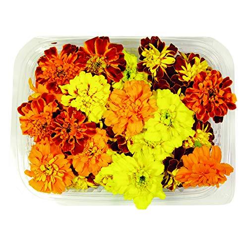 Fiori Commestibili BIOLOGICI - 30 TAGETE di COLORI ARANCIONE e GIALLO in vaschetta alimentare di 16 cm x 13 cm x 1,5 cm - Coltivati in Toscana dall'azienda agricola Carmazzi