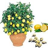Portal Cool 10Pcs Lemon Samen Erbstück Garten-Baum im Freien Obst Rare Grün Pflanzensamen