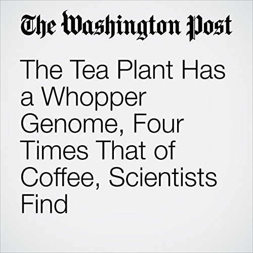 The Tea Plant Has a Whopper Genome, Four Times That of Coffee, Scientists Find copertina
