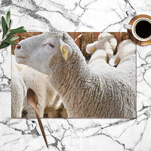 Tommy Warren Manteles Individuales, ovejas Granero Cría Animales de Granja Fauna Silvestre Manteles Lavables Manteles para Cocina Mesa de Comedor