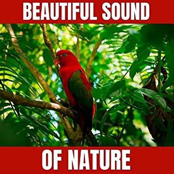 Beautiful Sound of Nature