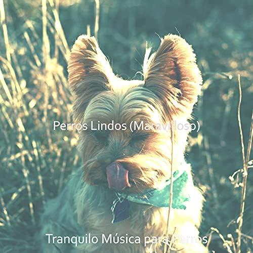 Tranquilo Música para Perros