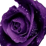 20pcs Purple Yellow Champagne Flower