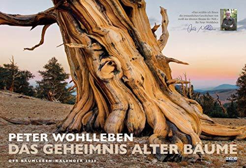Das Geheimnis alter Bäume: Der Baumleben-Kalender 2020 - Wandkalender
