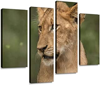 Side profile of a Lion cub in the Kruger National Park, South Africa Canvas Print Artwork Wall Art Pictures Framed Digital...