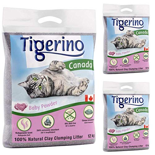 Tigerino Canada Katzenstreu, klumpend, Babypuderduft, 3 x 12 kg, parfümiert, antibakteriell, Einweg-und hypoallergene Hygienestreu mit Geruchskontrolle.