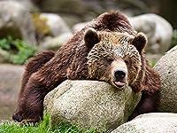 S-RONG雑貨屋 キッズジグソーパズル500ピース Bear Laziness Rocks Predator Tongue Animal エンターテインメントDIYおもちゃ子供のための創造的な誕生日プレゼント十代の若者たち家族の家の装飾楽しいゲーム大人の子供たち