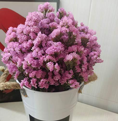 TooGet Ramo de Flores Secas Naturales Para Olvidarme De Miosotis, Paqu