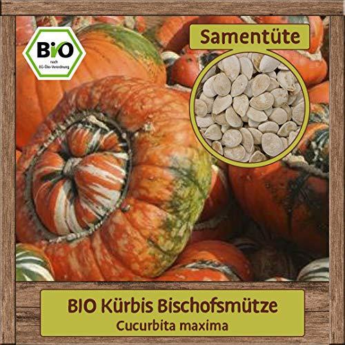 BIO Kürbis Samen Sorte Bischofsmütze (Cucurbita maxima) Gemüsesamen Kürbis Saatgut
