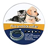 NINGBO CHANSON Flea and Tick Collar - 8 Month Protection Adjustable Waterproof Collar for Dog Puppy Kitten Cats, Natural & Safe Efficiently Repell Locust Lice of Pets (Grey, Generic)