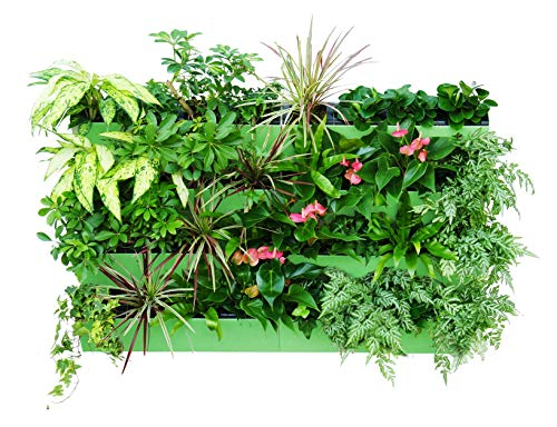 savvygrow bloomwall–Vertikal Übertopf mit Savvy Edge Technologie–selbstwässernder mit Hängebügel–Innen Außen–Balkon Fenster Gärten–Kräuter Growing Kit und Dekore