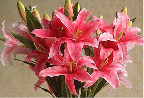 D DOLITY Weiß Lilie Blumenstrauß Seidenblumen Kunstblumen Deko Blumen für Haus Büro und Laden - Dunkelrosa, 76cm