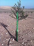 TUTORGARDEN Tutores para árboles diámetro 40 mm (19 Unidades) (1,75 m, Verde)