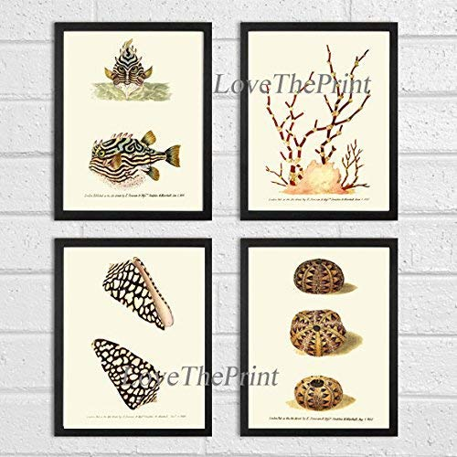 Sea Ocean Print Set of 4 Art Prints Beautiful Antique Fish Coral Shells Sea Urchins Ocean Marine Nature Home Room Wall Decor Unframed DON