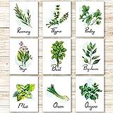 9 Carteles de Impresión de Hierba de Cocina Póster de Arte de Pared Botánica...