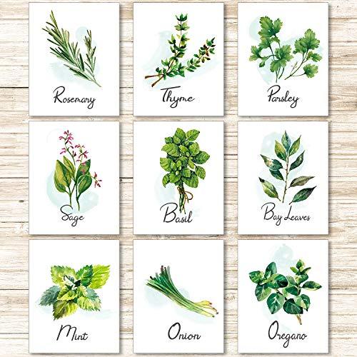 9 Stücke Küche Kräuter Botanisch Wand Kunst Drucke Poster Natur Blumen Pflanze Grün Kunst Schild Bild für Schlafzimmer Wohnzimmer Wand Dekorationen, (Ungerahmt, 8 x 10 Zoll)