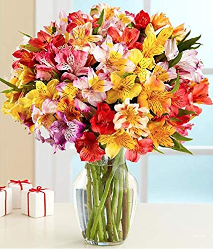 Flower Delivery Service Bloomsybox- Rainbow Fields Multicolored Alstroemeria Bouquet Full Flowers Sustainably Grown and Harvested, No Vase Included