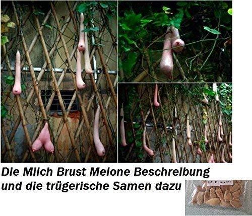5 x die Lait Poitrine Melon Graines Description et que trompeuses Graines à #229