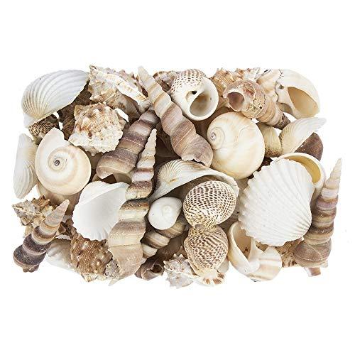 Potpourri | Muscheln | 450 g | natur | Verschiedene Muschelarten