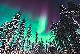 Polarlichter im Wald Alaska XXL Wandbild Kunstdruck Foto