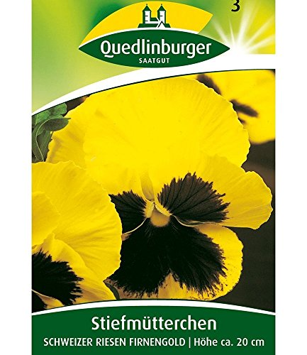 Riesen-Stiefmütterchen gelb 'Schweizer Riesen', 1 Tüte Samen